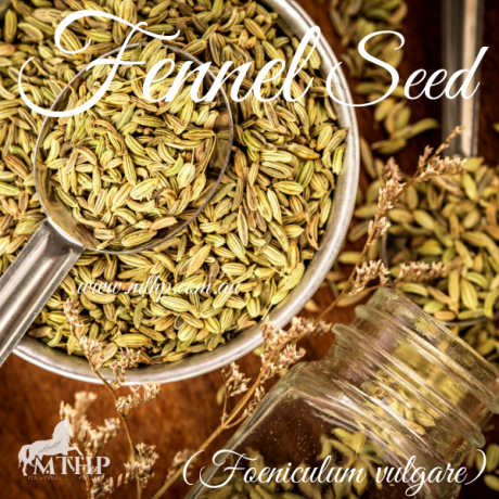 Fennel Seed Sq