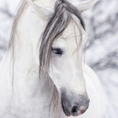 Wintering Your Horse With Medicine Tree