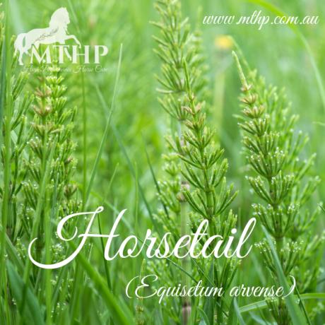 Horsetail Sq (1)