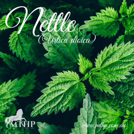 Nettle Fresh Sq