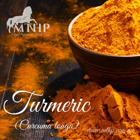 Turmeric Sq