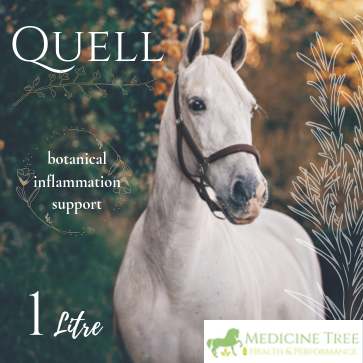 Quell is a liquid botanical blend, made with a combination of herbs which have been traditionally used to support the body's natural anti-inflammatory processes, block or moderate the action of pro-inflammatory chemicals, and reduce the damage caused by excessive and long-lasting inflammation.