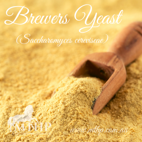 Brewers Yeast Sq