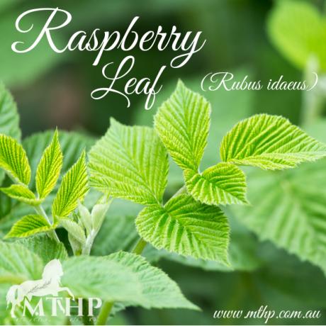 Raspberry Leaf Sq